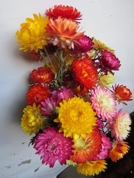 Siempre Vivas O Flores De Papel, Flores Secas En Ramo