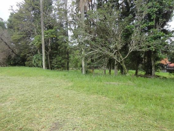 Terreno Villa Lombarda - Te2661