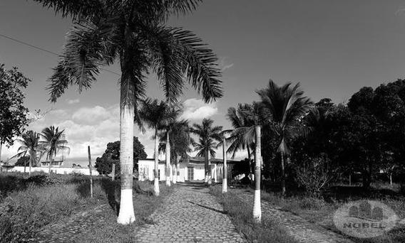 Chácara/sítio Com 4 Dormitório(s) Localizado(a) No Bairro Santo Antonio Dos Prazeres Em Feira De Santana / Feira De Santana - 4616