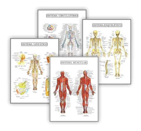 Kit 4 Posteres Anatomia Med Fisioterapia Fisiologia 45x60 Cm