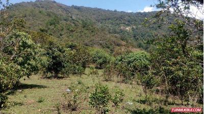 Terrenos En Venta, Pedregosa, Mérida