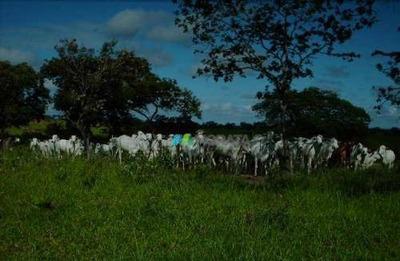 Fazenda Pecuária 1870 Ha Região Montes Claros (mg) - Codigo: Fa0263 - Fa0263