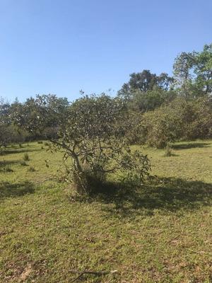 Fazenda A Venda No Pantanal Ms (pecuária) - 922