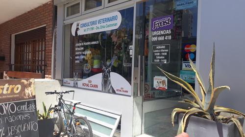Venta Local Comercial Con Renta Punta Carretas