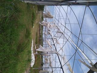 Invernadero Estructuras Usadas