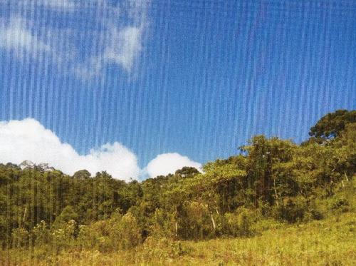 Terreno Pode Ser Utilizado Como Compensação Ambiental