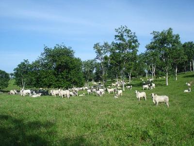 Fazenda Em Pium To, Dupla Aptidão - 18