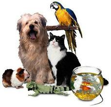 Hospedagem De Animais De Estimação.
