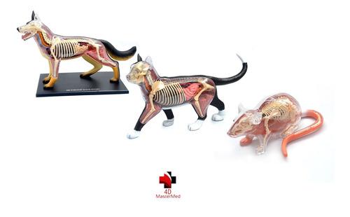 Imagem 1 de 7 de Anatomias: Cachorro, Gato E Rato - 4d Master