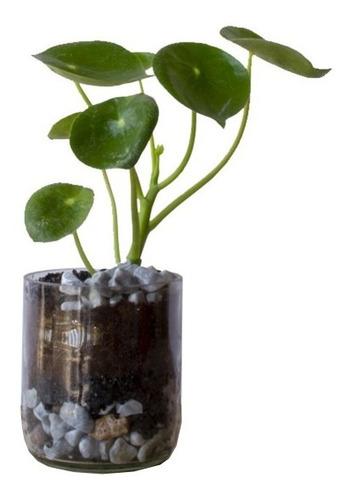 Plantas Interior Cuchara Little Terrario 10