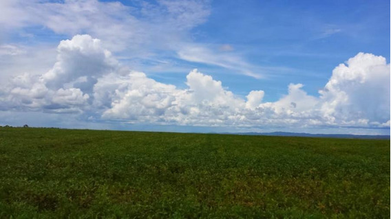 Fazenda Para Venda Em Planalto Da Serra, Zona Rural - 1083