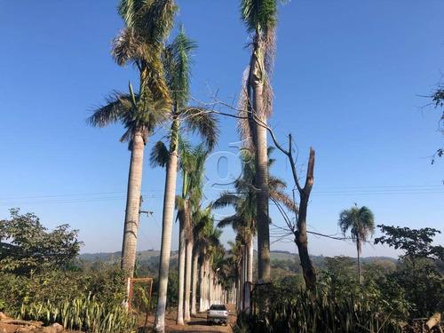 Imagem 1 de 25 de Chácara Com 3 Dormitórios À Venda, 31000 M² Por R$ 850.000,00 - Agua Das Flores - Jataizinho/pr - Ch0032