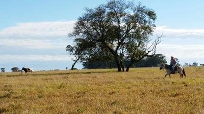 Fazenda A Venda Em Naviraí - Ms (pecuária) - 778