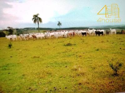 Fazenda Rural À Venda, Parque Paineiras, Itapeva. - Fa0007