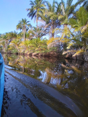 Passeio Barco Pantamal Marimbus + Rio Roncador - Bahia