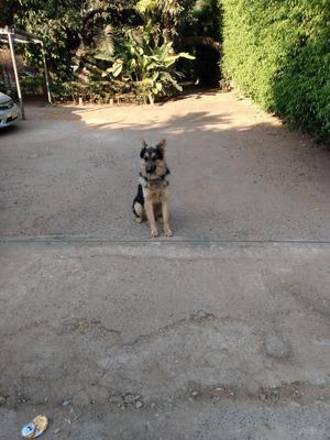 Adestramento De Cães Em Domicílio Melhor Preço De Brasília