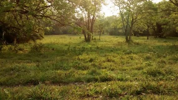 Fazenda A Venda Em Bonito - Ms (pecuária) - 951