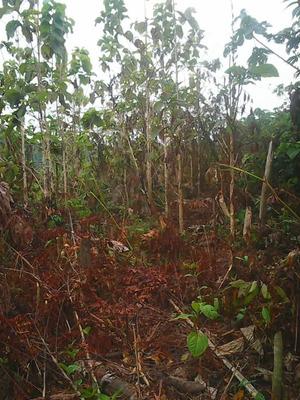Terreno En Oxapampa