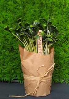 Plantas De Plástico Para Cocina, Romero Y Brote De Soja