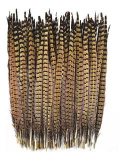 Plumas De Faisán 30_35cm 10 Unidades