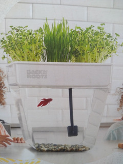 Jardín Acuático Pecera Back To The Roots Hierbas Germinados