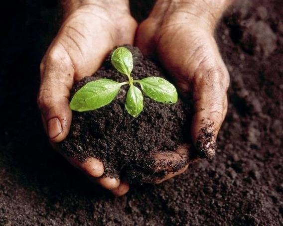 10 Kg Composta Organica Para Plantas Y Jardineria
