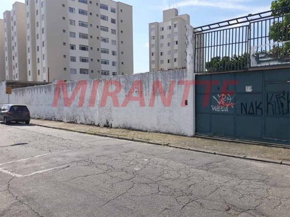 Terreno Em Jaçana - São Paulo, Sp - 322928