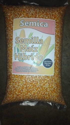Semillas De Maiz Amarillo Certificadas