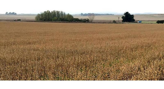 Campo De 100 Has - 60% Agrícolas - Inmejorable Ubicación Sobre Ruta A 15km De La Ciudad De Tandil
