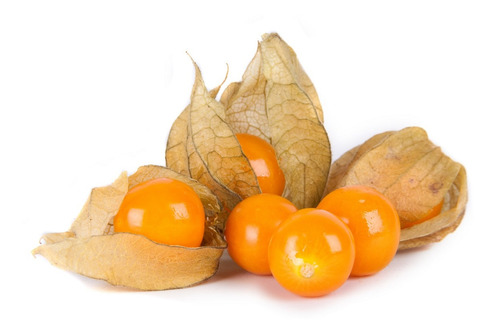 30 Sementes Importadas Physalis Edulis Fisalis Goldenberry