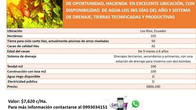 Hacienda De Cacao De Calidad Y De Arroz O Para Ciclo Corto