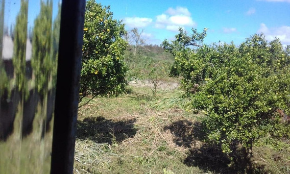 Terreno Em Santa Luzia, Quatro Barras/pr De 0m² À Venda Por R$ 125.000,00 - Te297275