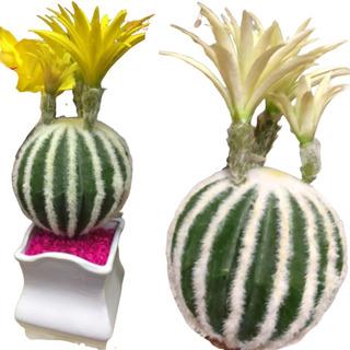 Cactus Artificial Con 2 Flores, 22 Cms De Alto.