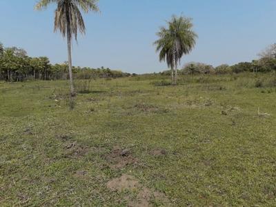 Fazenda A Venda Em Miranda - Ms (pecuária) - 988