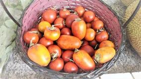 Sementes Fruta Amazônica Mana Cubiú Solanum 50 Sementes