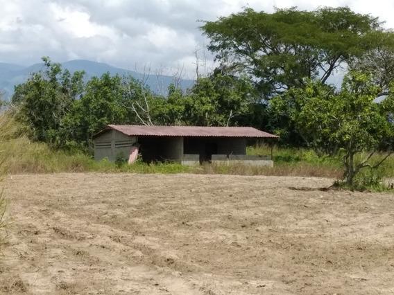 Terreno Granja 7 Has , Finca Con Casa Luz Agua Yaracuy