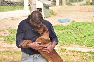 6 Cachorros Machos 1 Hembra 4 Meses Adopcion Gratis Mascota