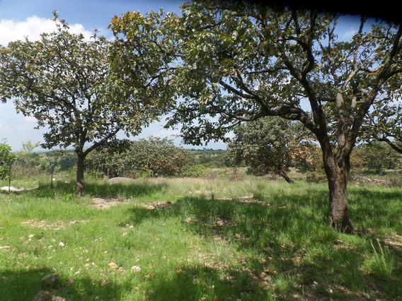 Oportunidad Hermosa Vista Panoramica, Arbolado A 20 Min Gdl