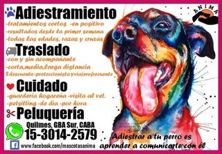 Servicio Para Mascotas, Adiestramiento, Traslado, Guarderia
