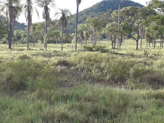 Fazenda A Venda Em Bonito - Ms (pecuária) - 1003