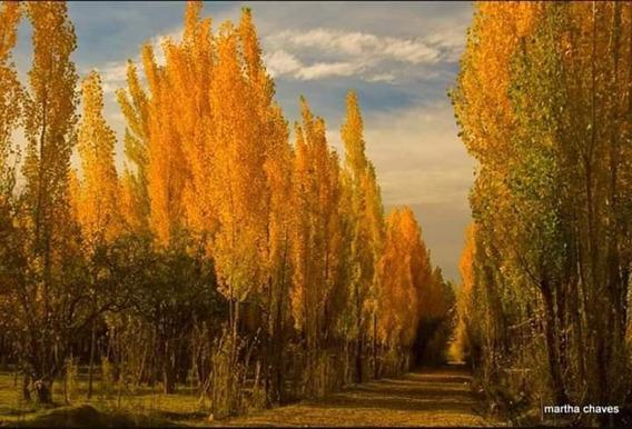 Finca Altamira, San Carlos, Mendoza, Argentina