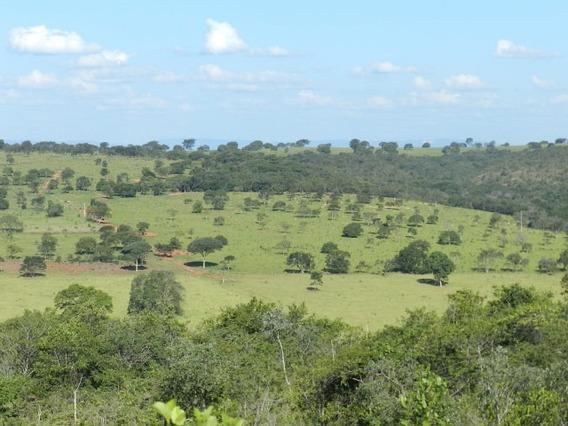 Fazenda Martinho Campos - 3016