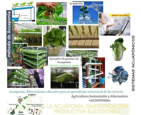 Acuaponia Cultivos Aprende Negoci Casero Industrial Info X38