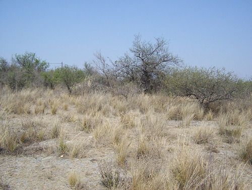 Imagen 1 de 7 de Terreno En Villa Parque Siquiman (ref 13806)