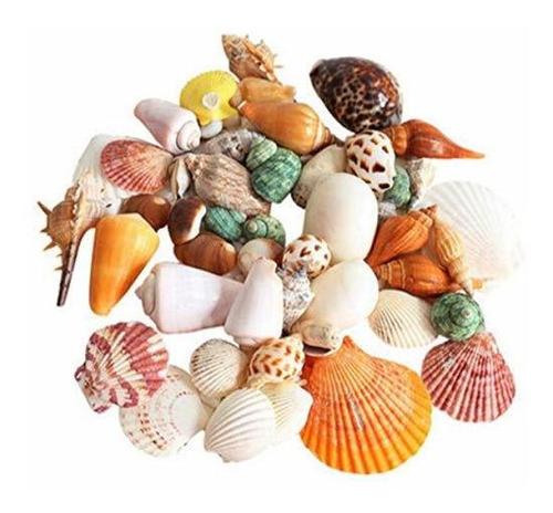 Imagen 1 de 2 de 90 Conchas Marinas Mixtas De Playa, Coloridas Conchas Natura