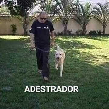 Imagem 1 de 10 de Adestrador De Cães