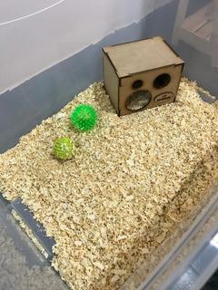 Casa - Terrario - Caja Plástica Para Hamster, Erizo Envio