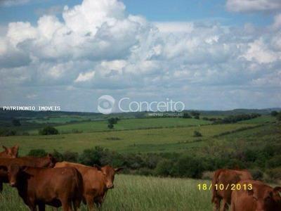 Fazenda Para Venda Em Uruguaiana, No Extremo Oeste Gaúcho. - 7451
