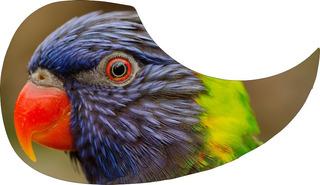 Escudo Palheteira Resinada Violão Aço Orange Parrot