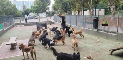 Paseo Perros Y Guardería